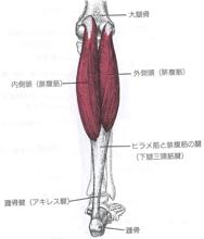 痛み 腓腹筋 裏 の 膝